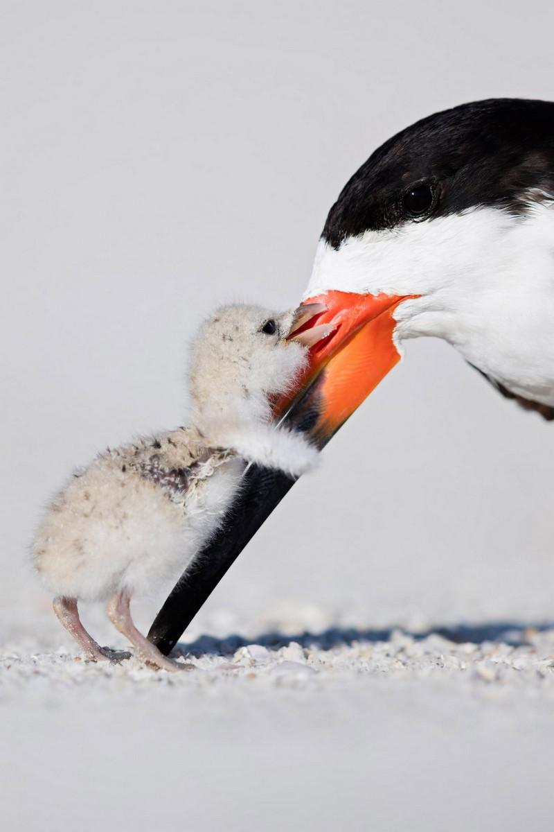 pobediteli konkursa ptichij fotograf goda 2018 4