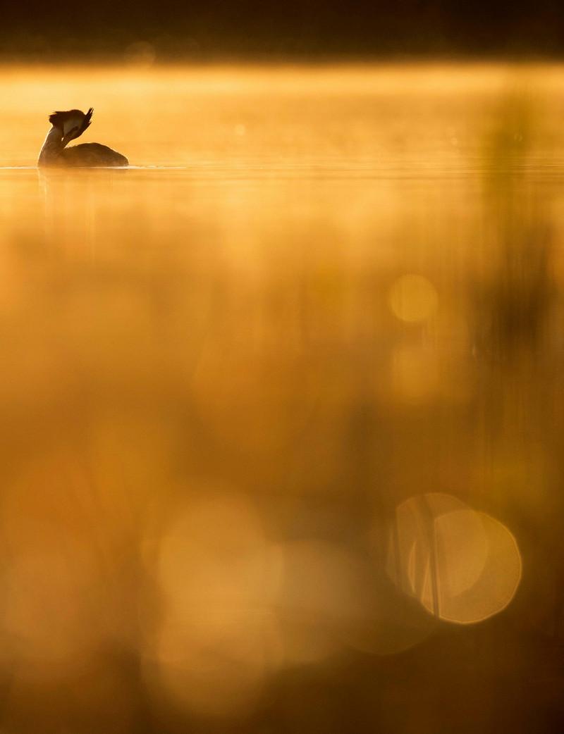 pobediteli konkursa ptichij fotograf goda 2018 6