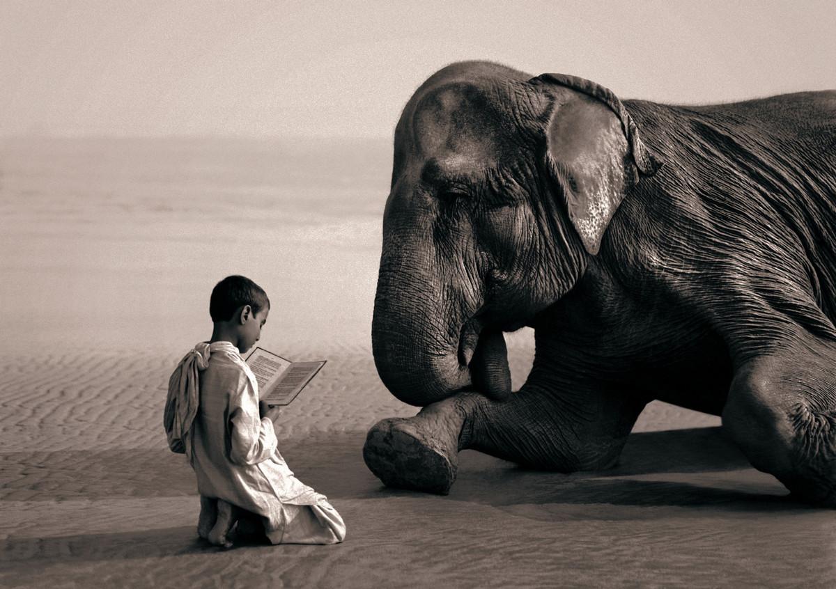 картинки со смыслом животные делать