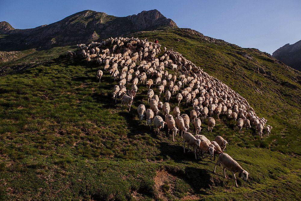 «Школа пастухов» – проект испанского фотографа Джоана Альвадо 2