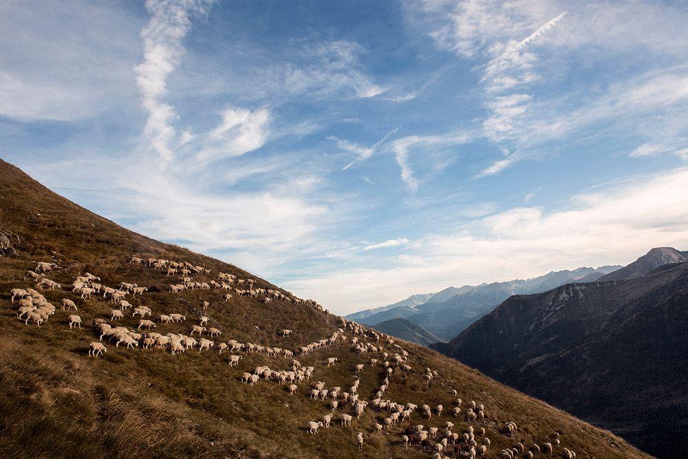 «Школа пастухов» – проект испанского фотографа Джоана Альвадо 22