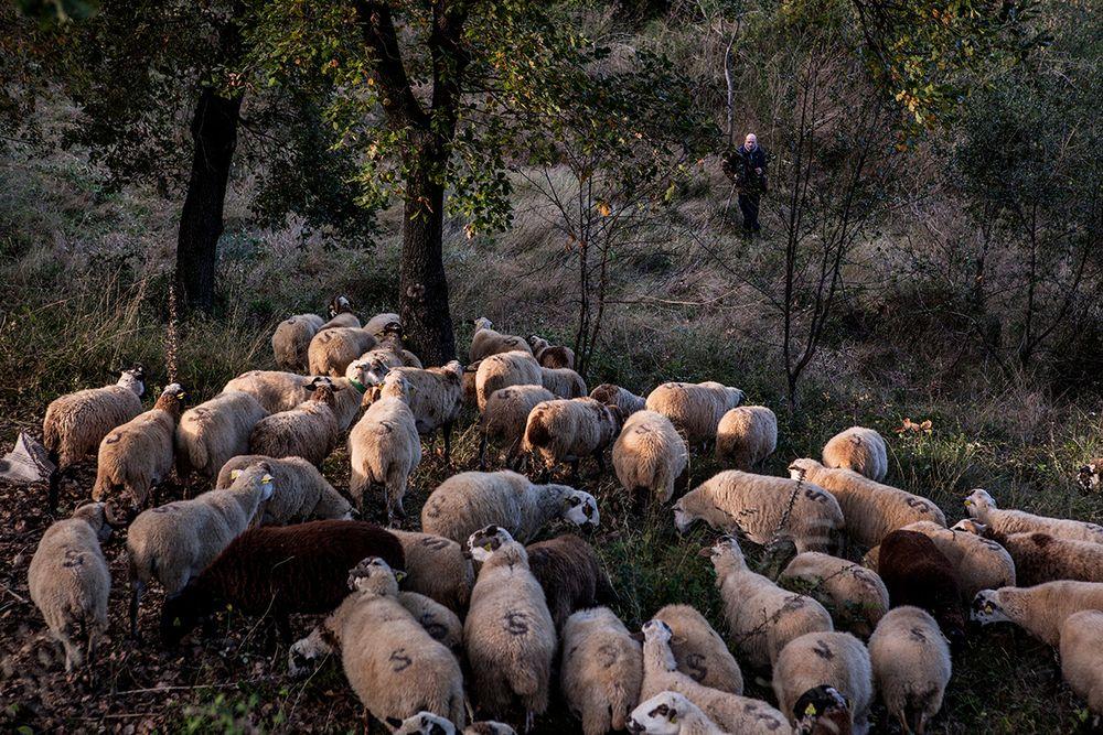 «Школа пастухов» – проект испанского фотографа Джоана Альвадо 25