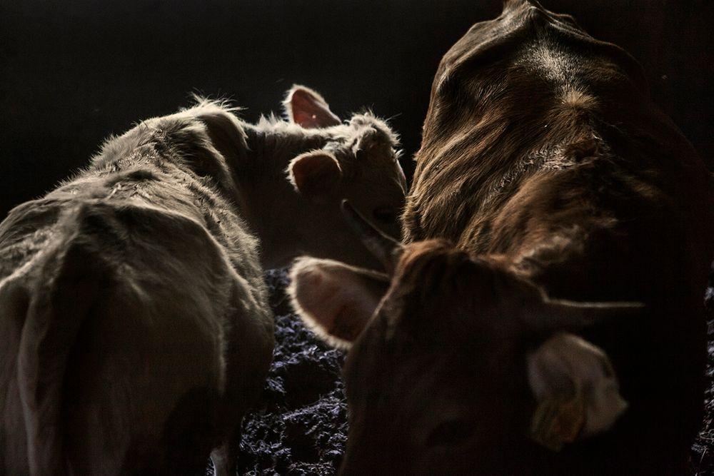 «Школа пастухов» – проект испанского фотографа Джоана Альвадо 5