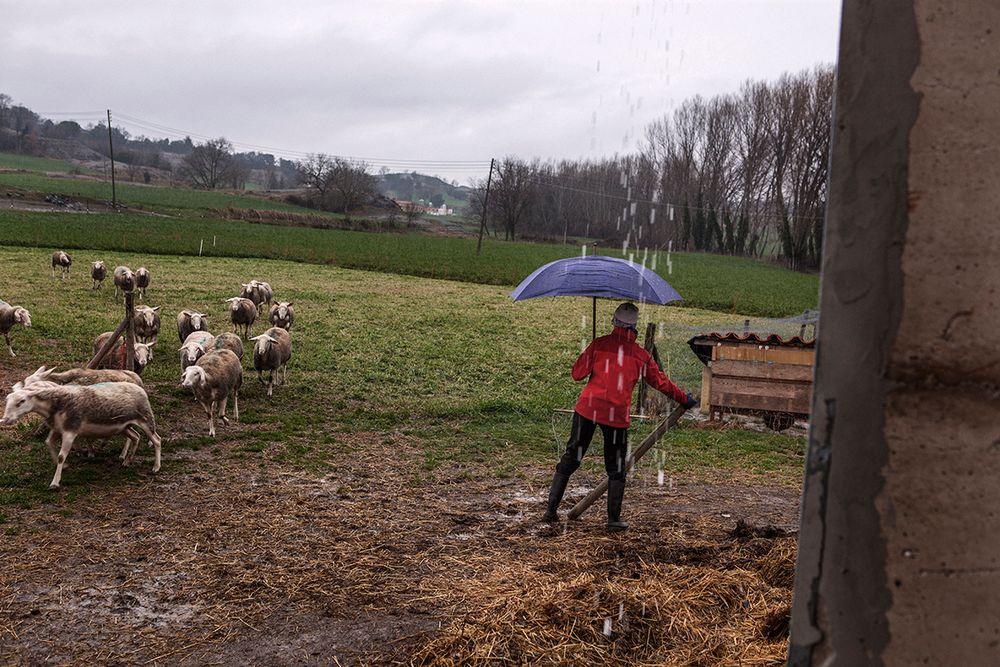 «Школа пастухов» – проект испанского фотографа Джоана Альвадо 8