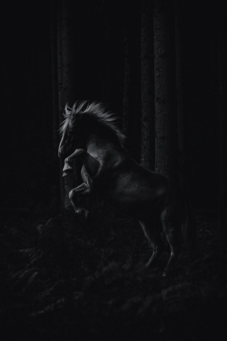 Победители конкурса чёрно-белой фотографии MonoVisions Photography Awards 2018 11