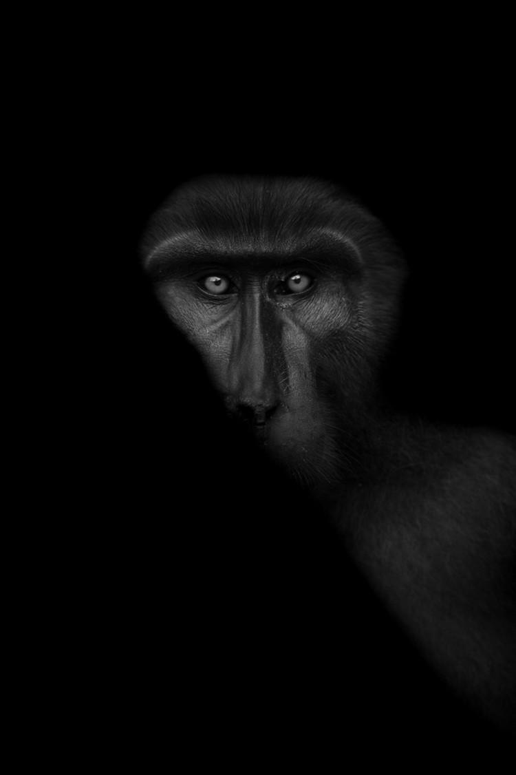 Победители конкурса чёрно-белой фотографии MonoVisions Photography Awards 2018 17