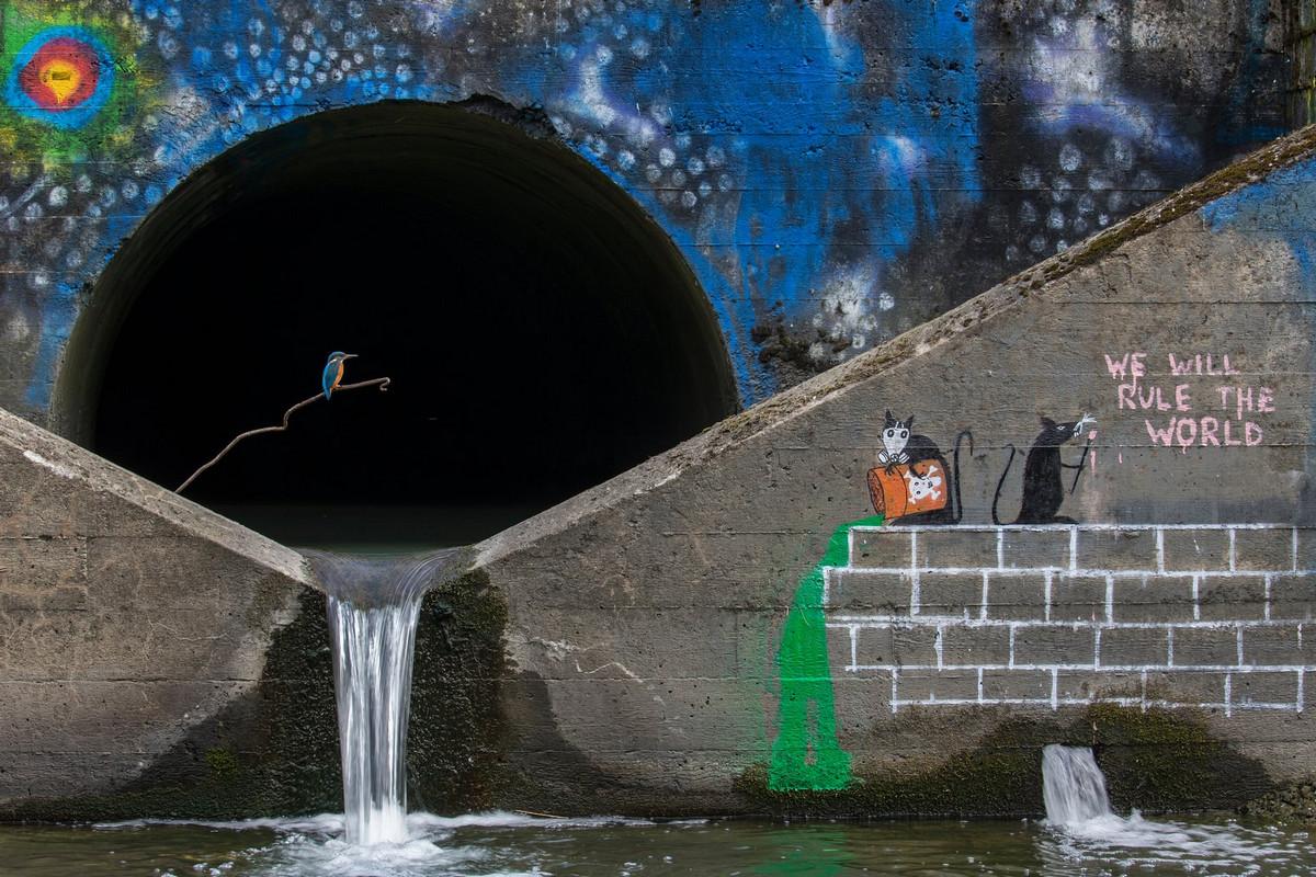 Победители конкурса «Европейский фотограф природы 2018 года»  15