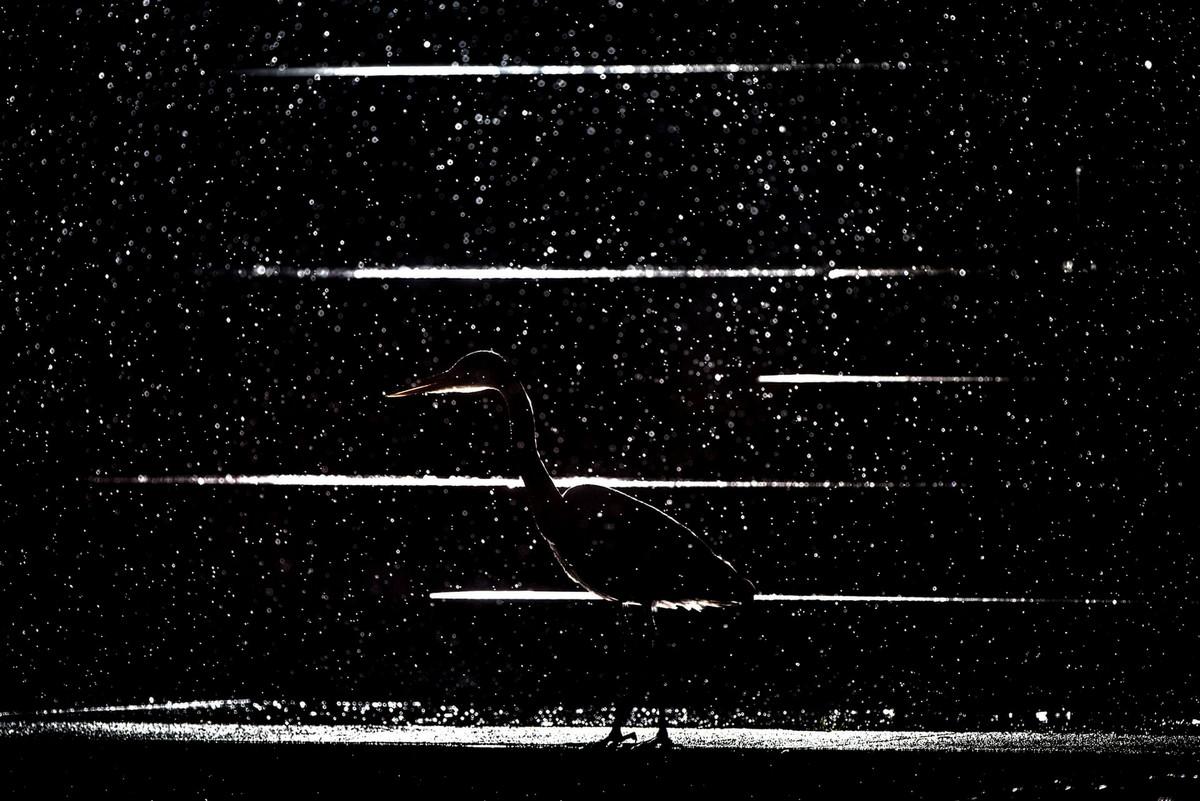 Победители конкурса «Европейский фотограф природы 2018 года»  17