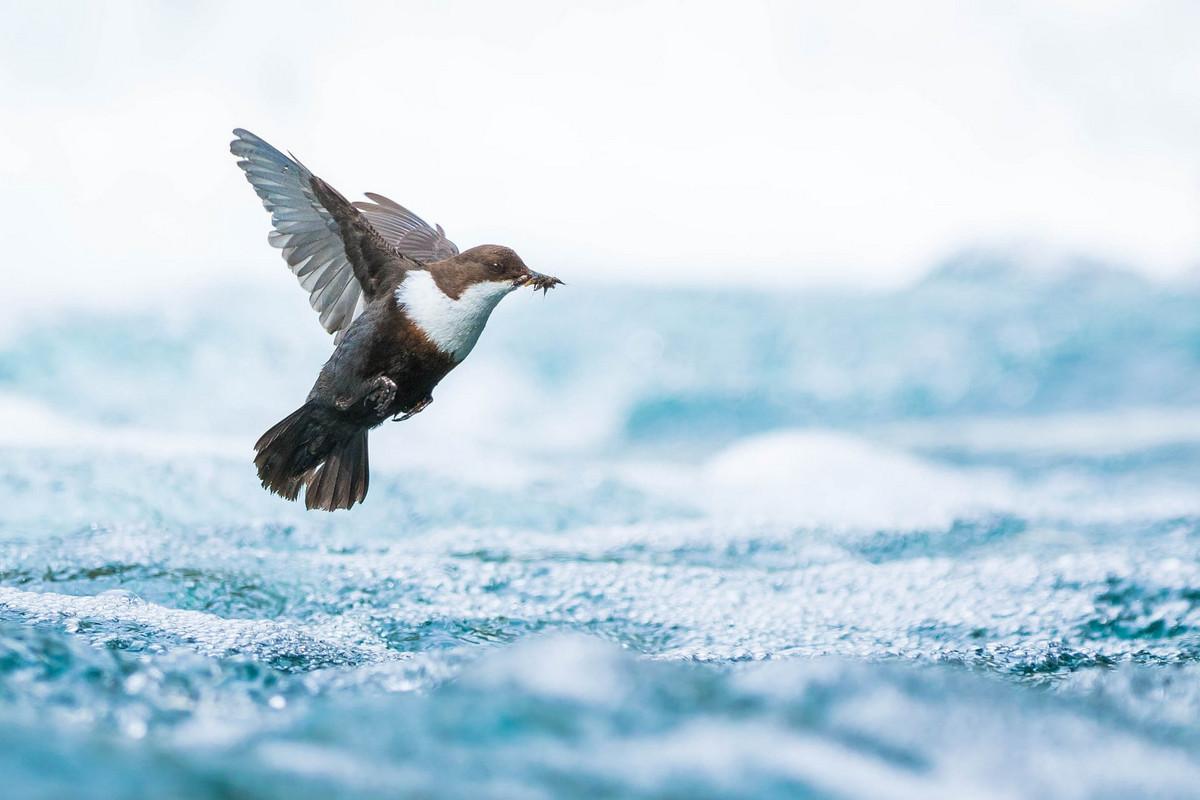 Победители конкурса «Европейский фотограф природы 2018 года»  19