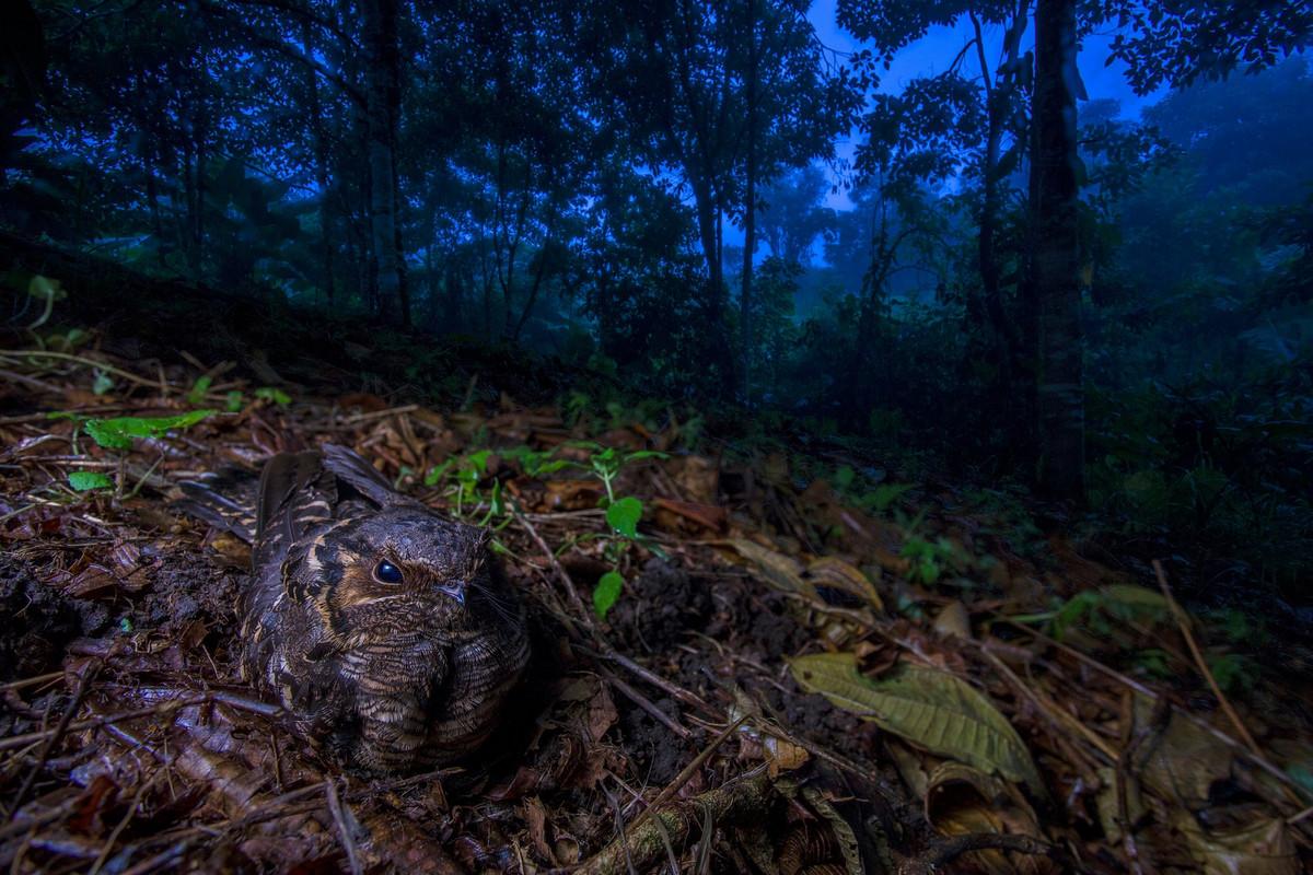 Победители конкурса «Европейский фотограф природы 2018 года»  2
