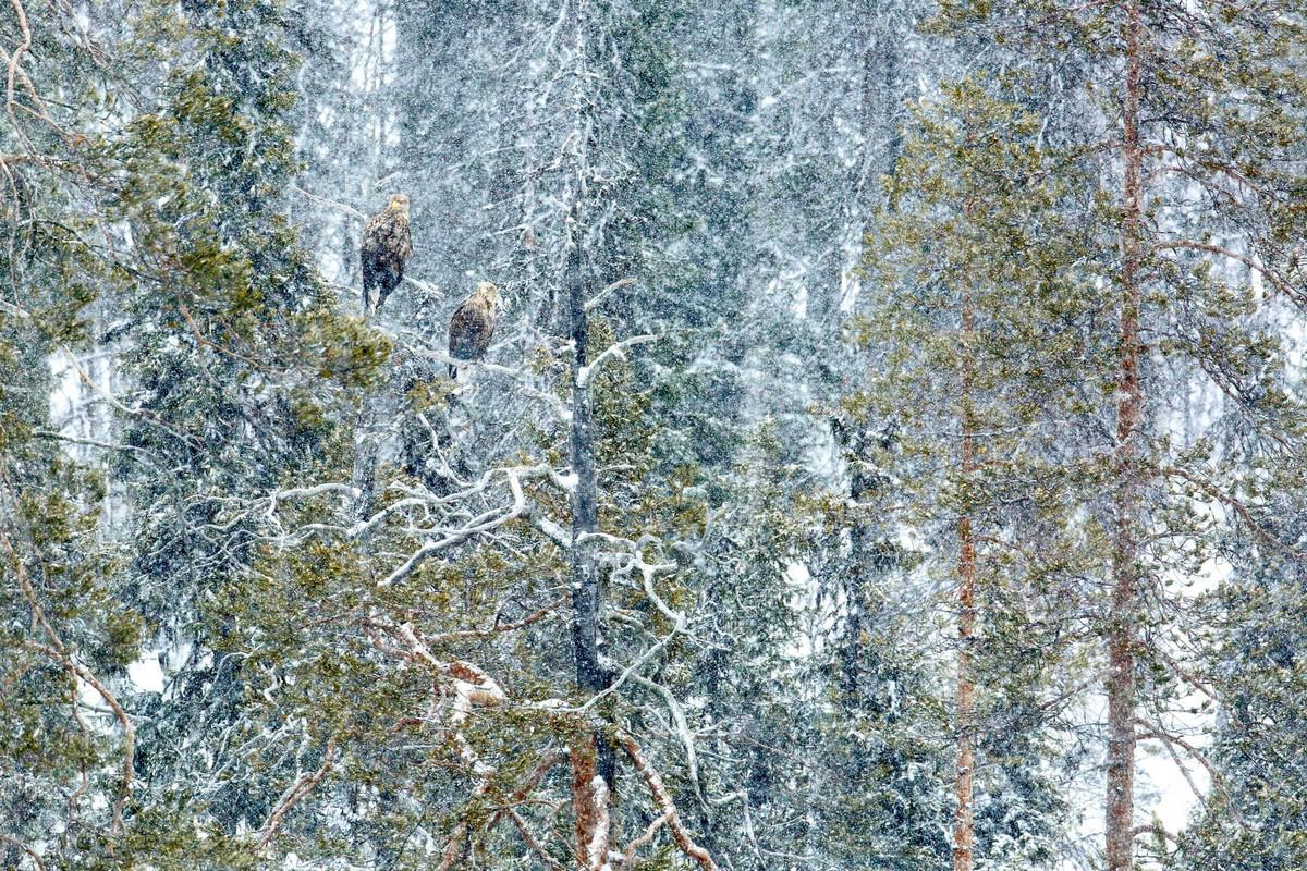 Победители конкурса «Европейский фотограф природы 2018 года»  3
