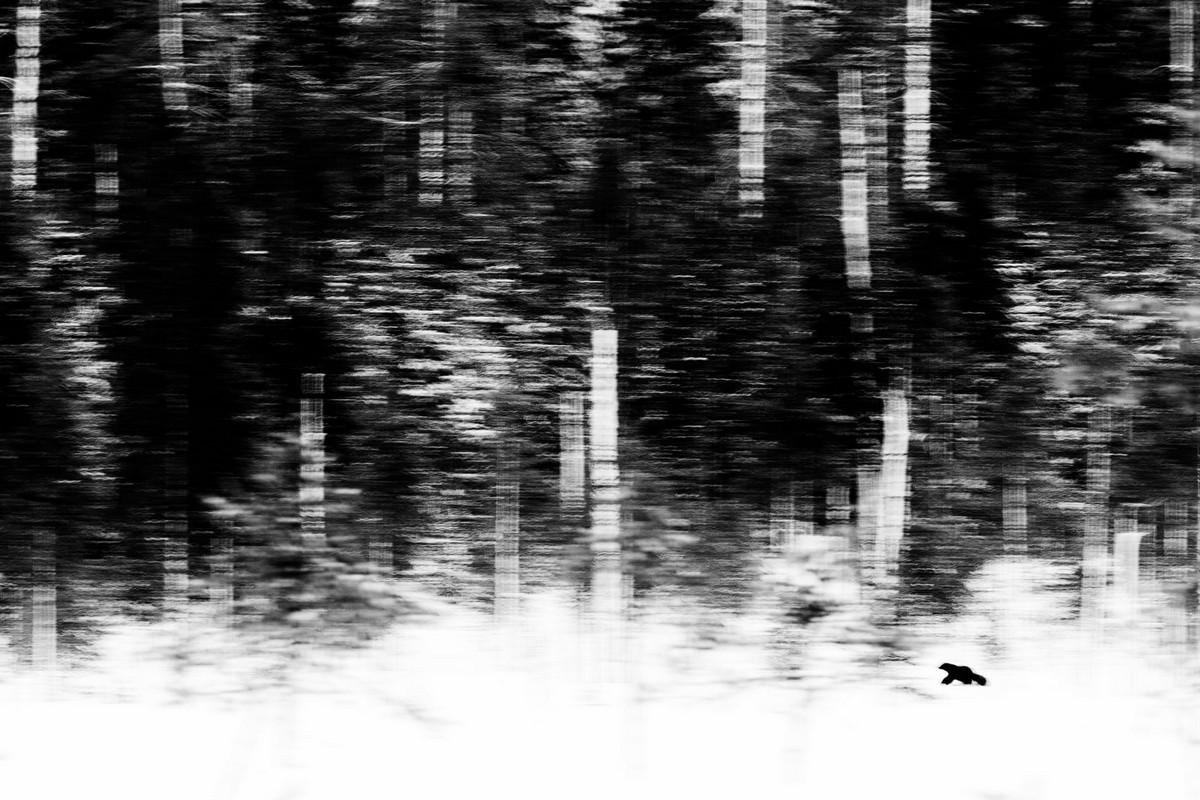 Победители конкурса «Европейский фотограф природы 2018 года»  4