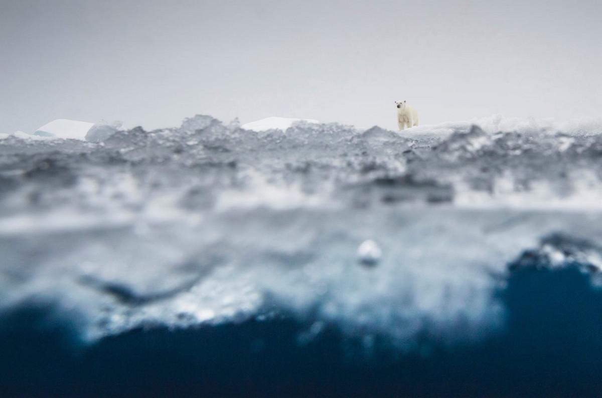 Победители конкурса «Европейский фотограф природы 2018 года»  5