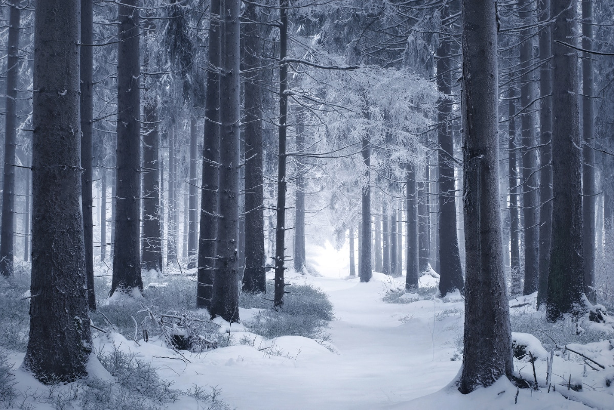 zimnie-peyzazhi-fotograf-Kilian-Shoenberger 10