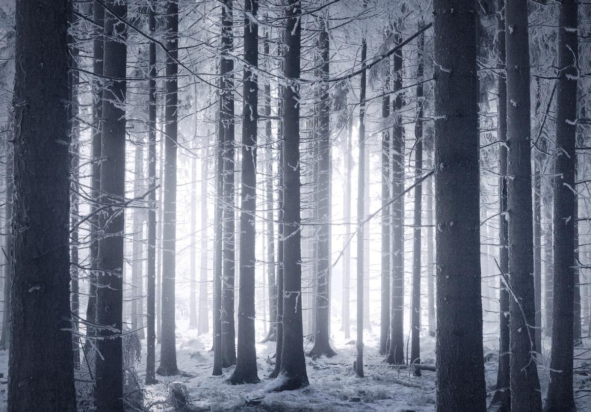 zimnie-peyzazhi-fotograf-Kilian-Shoenberger 12