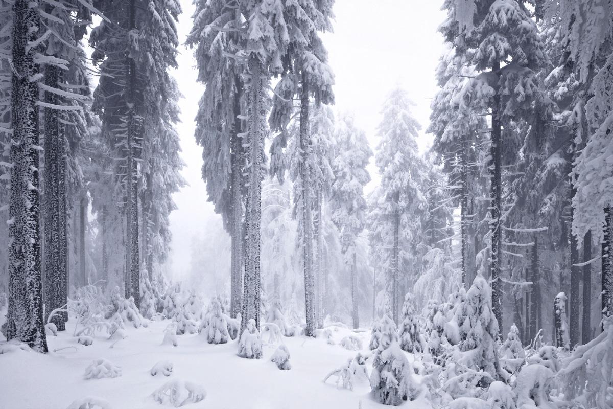 zimnie-peyzazhi-fotograf-Kilian-Shoenberger 18