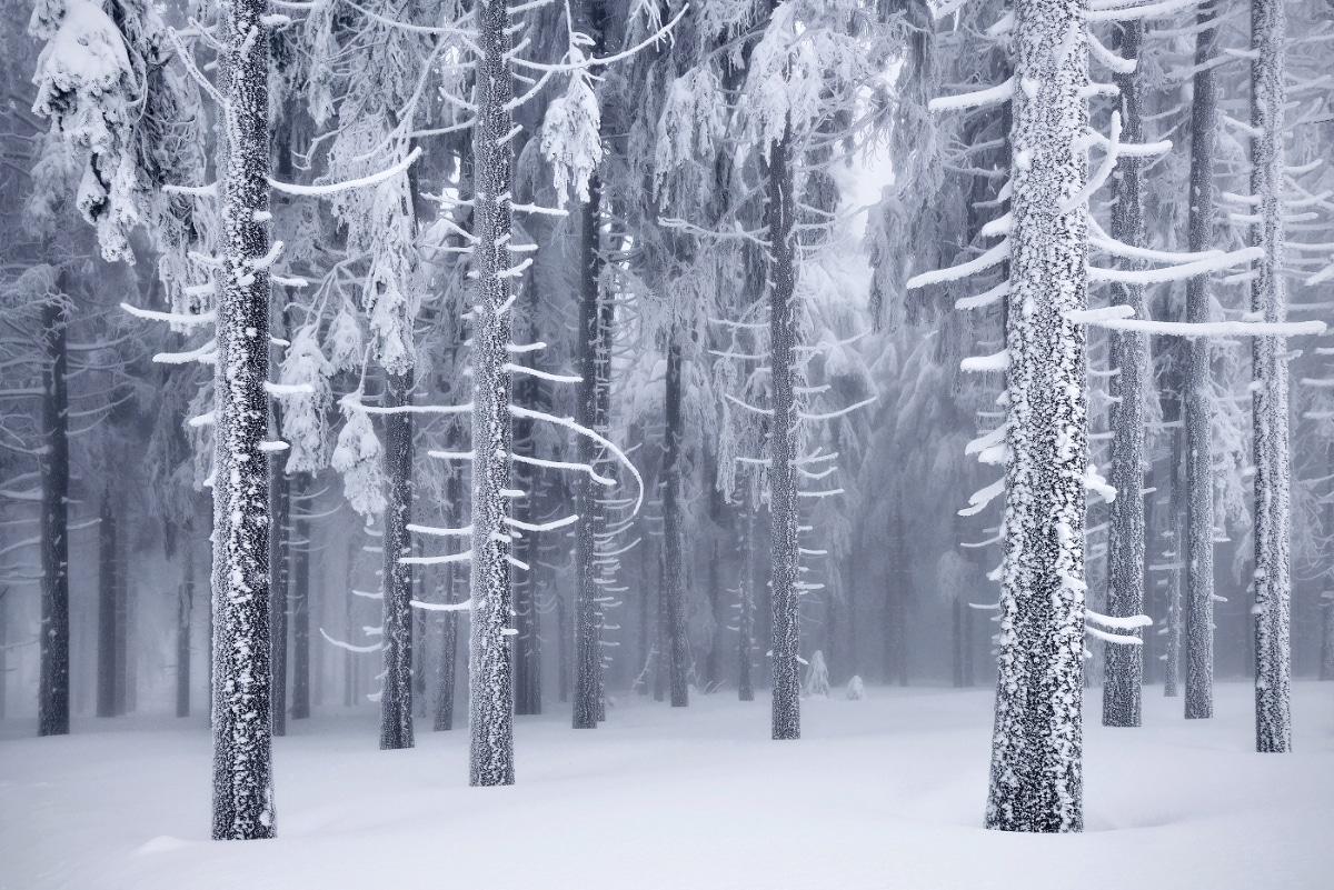 zimnie-peyzazhi-fotograf-Kilian-Shoenberger 5
