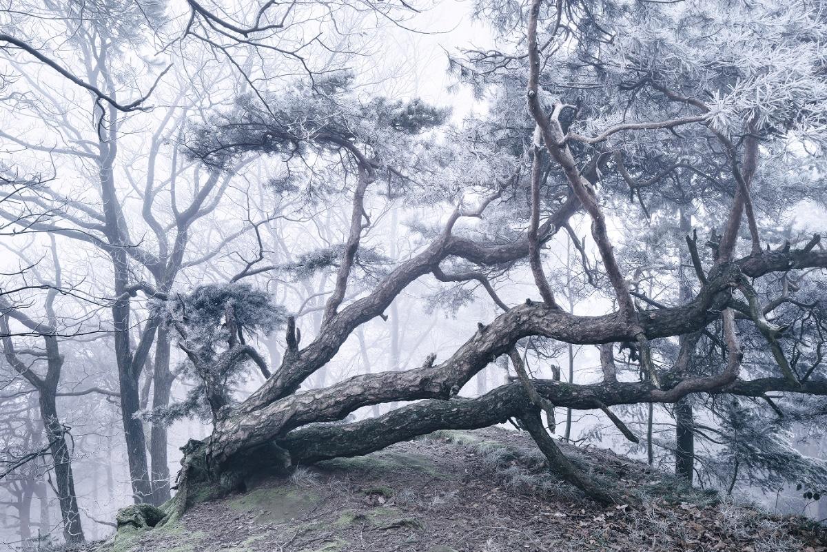 zimnie-peyzazhi-fotograf-Kilian-Shoenberger 8