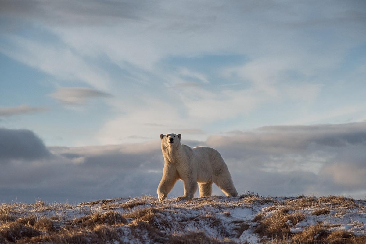 Победители и фавориты фотоконкурса «Дикая природа России – 2018» 12
