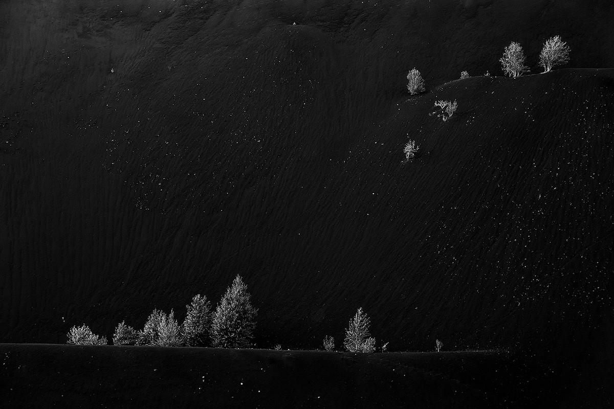 Победители и фавориты фотоконкурса «Дикая природа России – 2018» 15