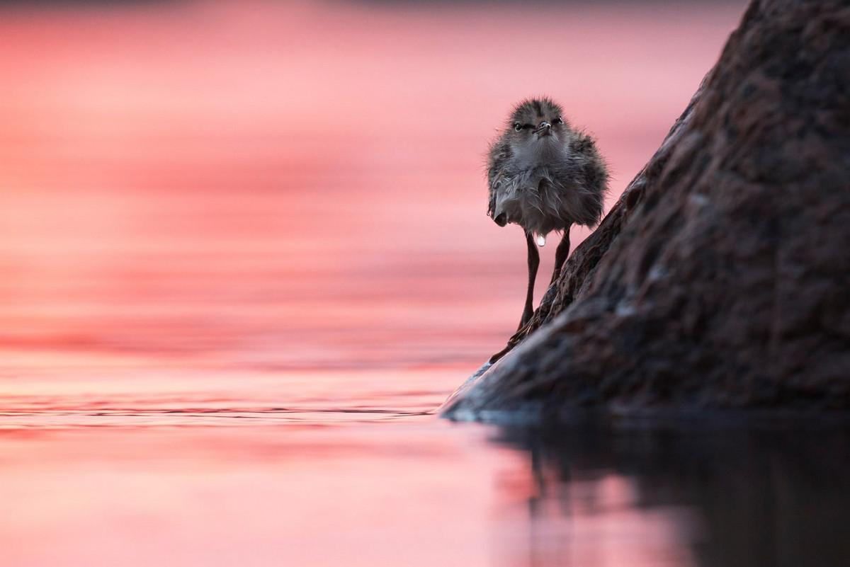 Победители и фавориты фотоконкурса «Дикая природа России – 2018» 24