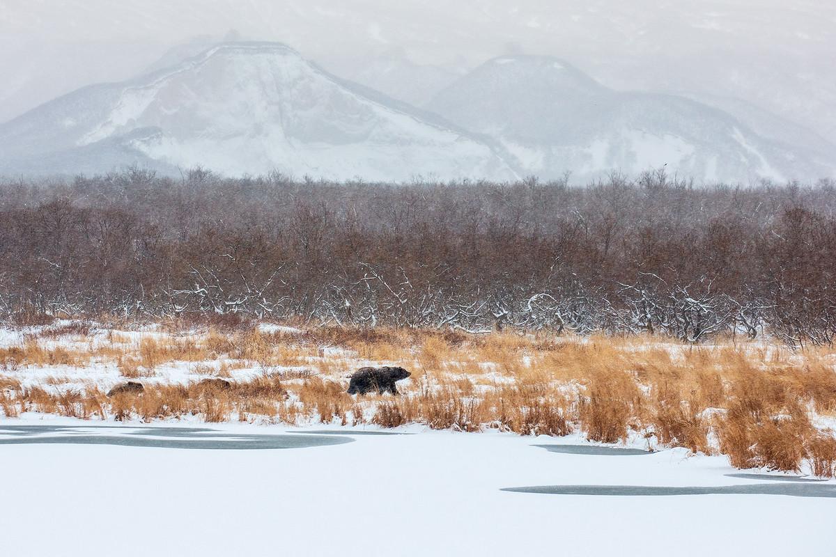 ПобедитеРи и фавориты фотоконкурса Дикая природа России – 2018 33