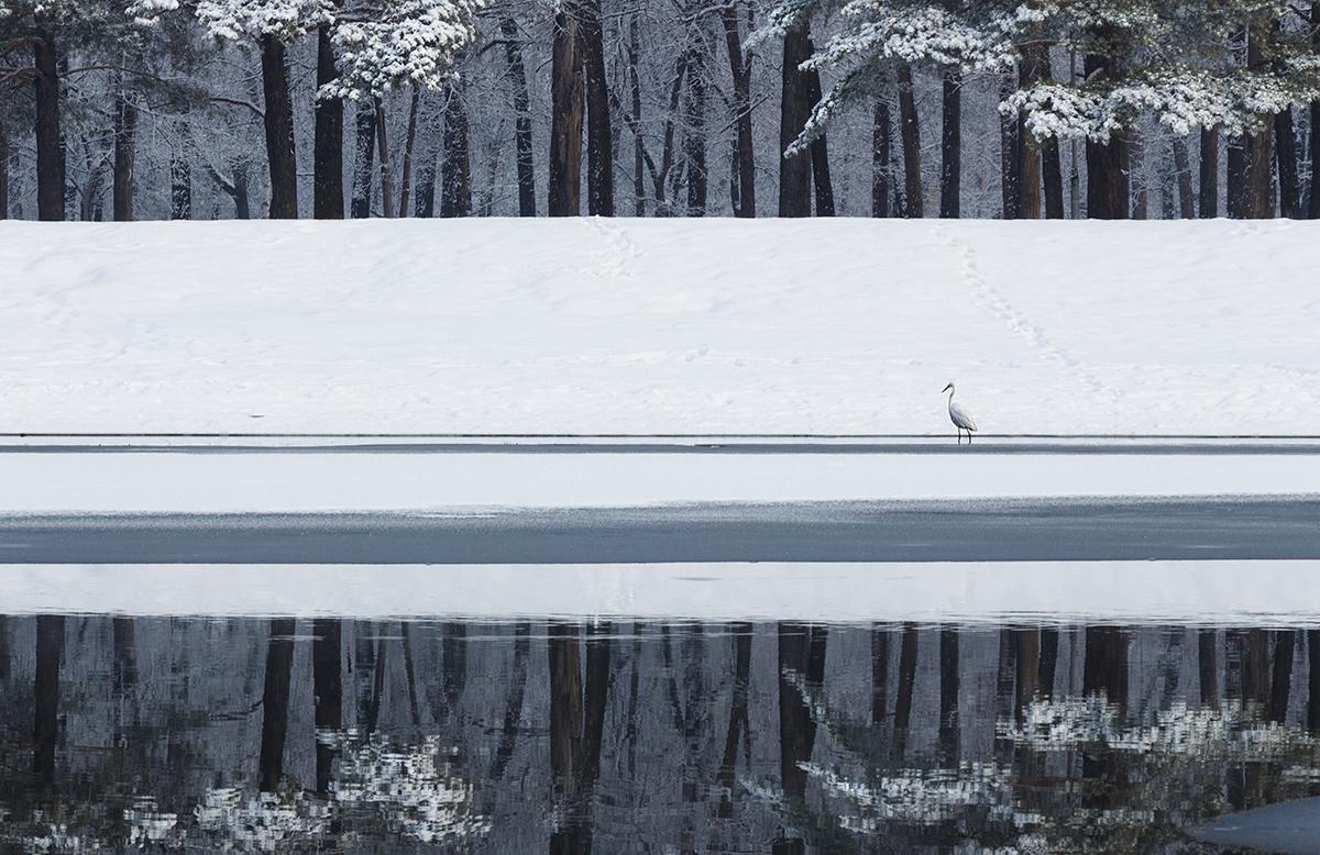 ПобедитеРи и фавориты фотоконкурса Дикая природа России – 2018 35