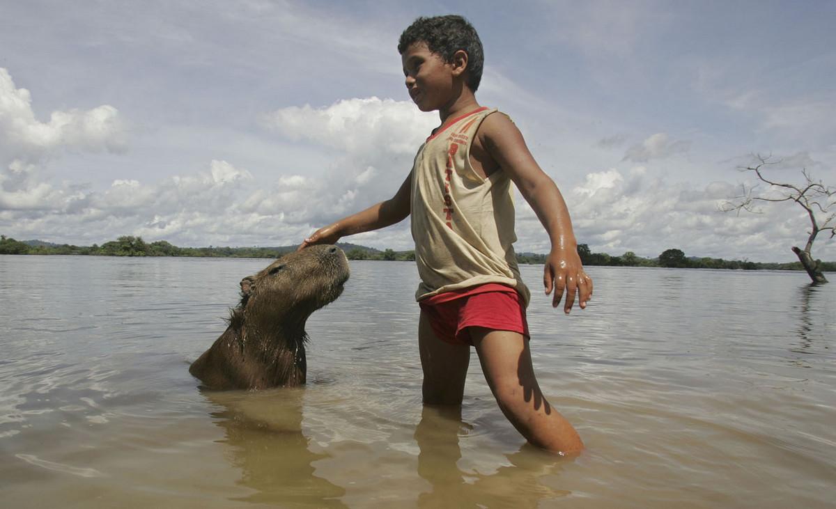 Капибара - Животное, с которым все хотят дружить 3