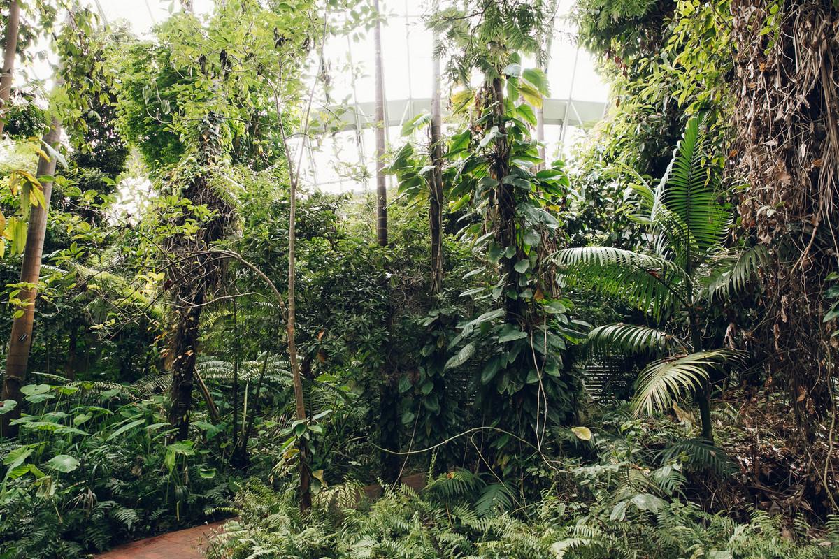 «Дуэт фотографов путешествует по миру, снимая ботанические сады, оранжереи и теплицы 14