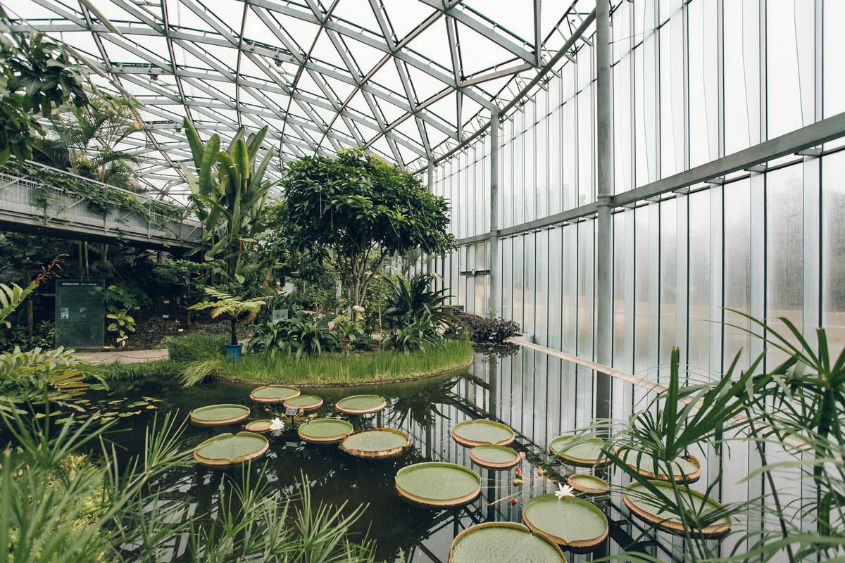 «Дуэт фотографов путешествует по миру, снимая ботанические сады, оранжереи и теплицы 15