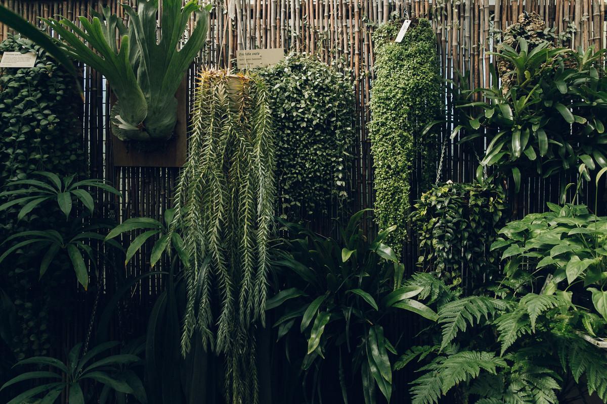 «Дуэт фотографов путешествует по миру, снимая ботанические сады, оранжереи и теплицы 18