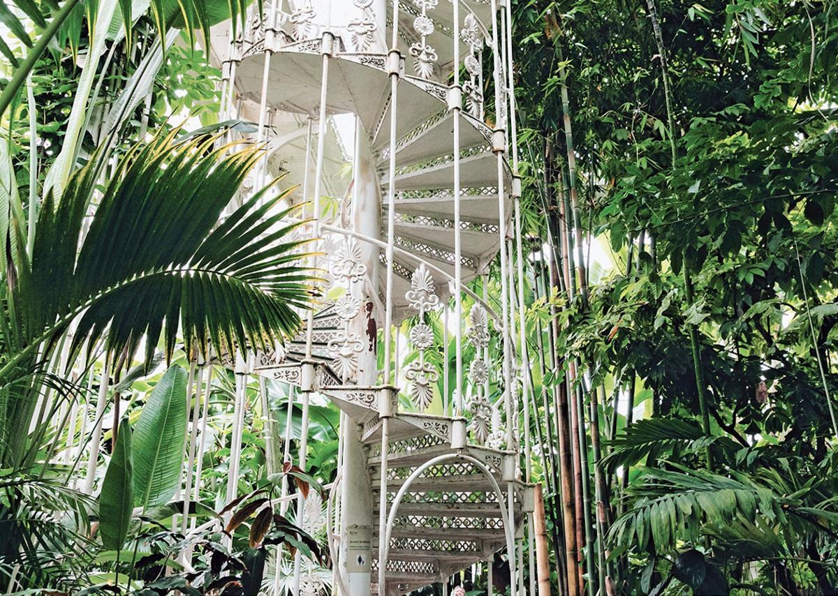 «Дуэт фотографов путешествует по миру, снимая ботанические сады, оранжереи и теплицы 19 1