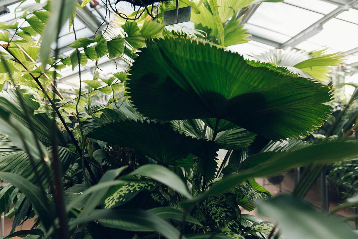 «Дуэт фотографов путешествует по миру, снимая ботанические сады, оранжереи и теплицы 19