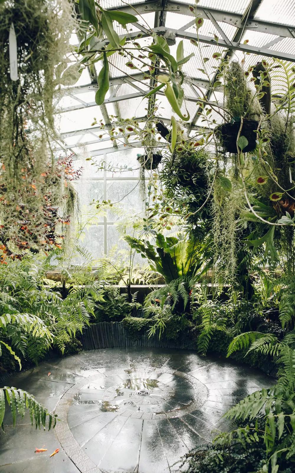 «Дуэт фотографов путешествует по миру, снимая ботанические сады, оранжереи и теплицы 4
