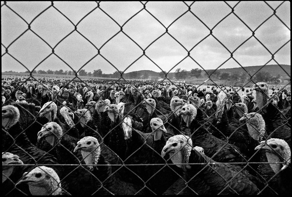 Репортаж с пристрастием. Греческий фотограф Никос Экономопулос 12
