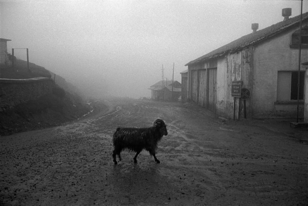 Репортаж с пристрастием. Греческий фотограф Никос Экономопулос 71