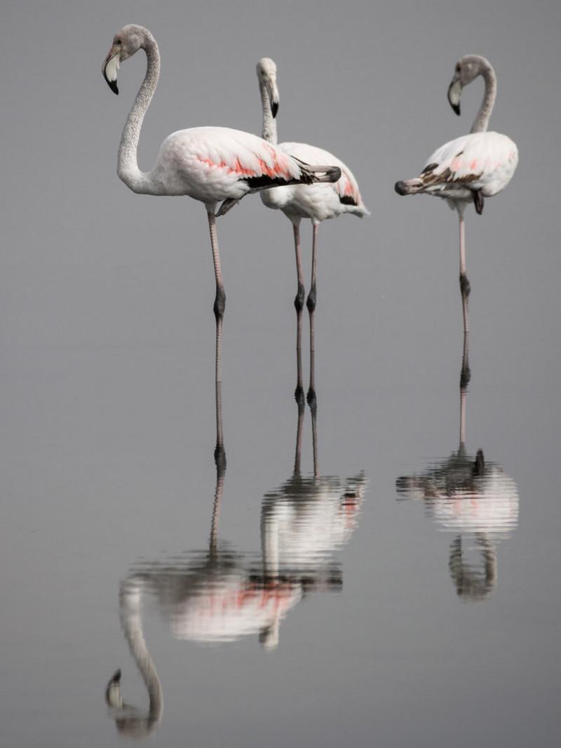 Красота планеты в работах победителей фотоконкурса «Вики любит Землю – 2018» 13