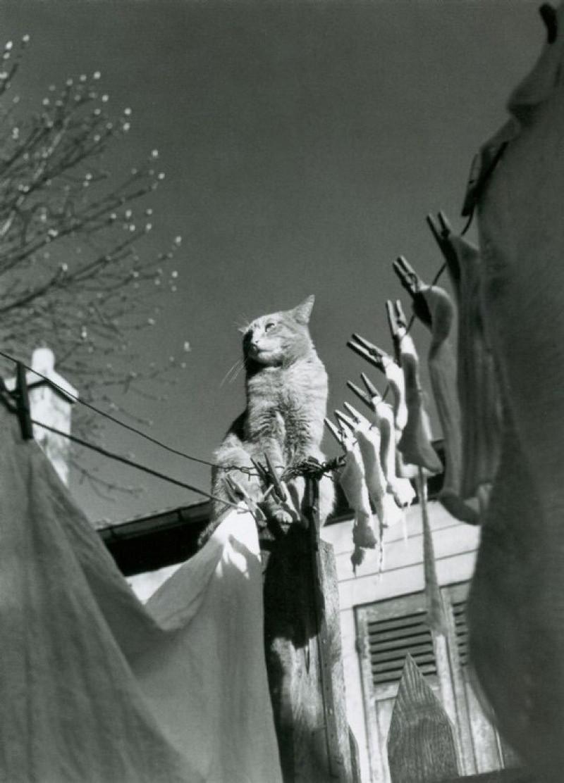 fotograf Izis Bidermanas Parizh 4