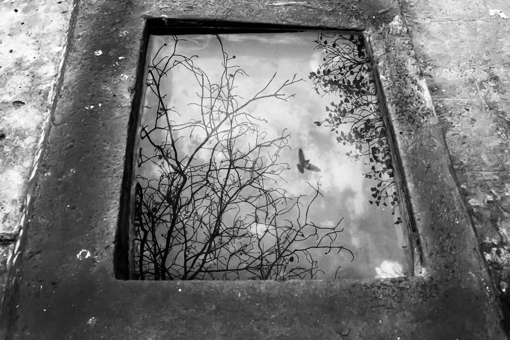 ulichnye-fotografii-zhivotnyh-Radzh-Sarkar 17