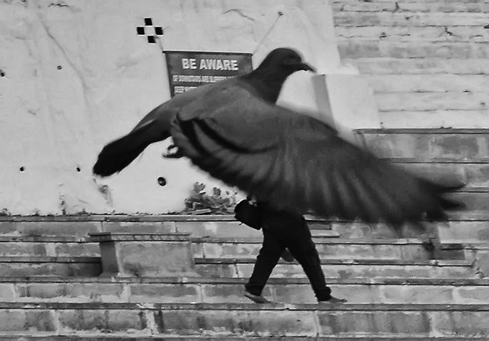 ulichnye-fotografii-zhivotnyh-Radzh-Sarkar 25