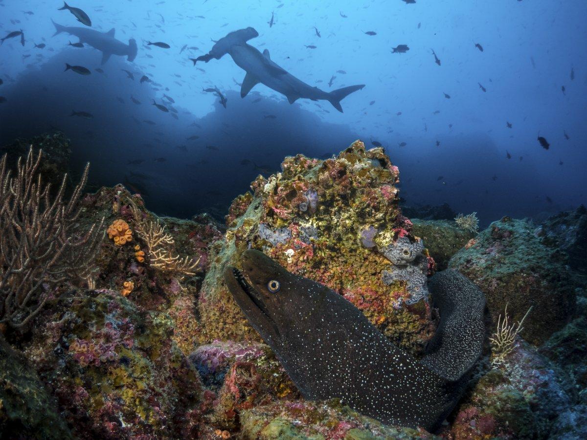 фото новые подводного мира что дело закончится