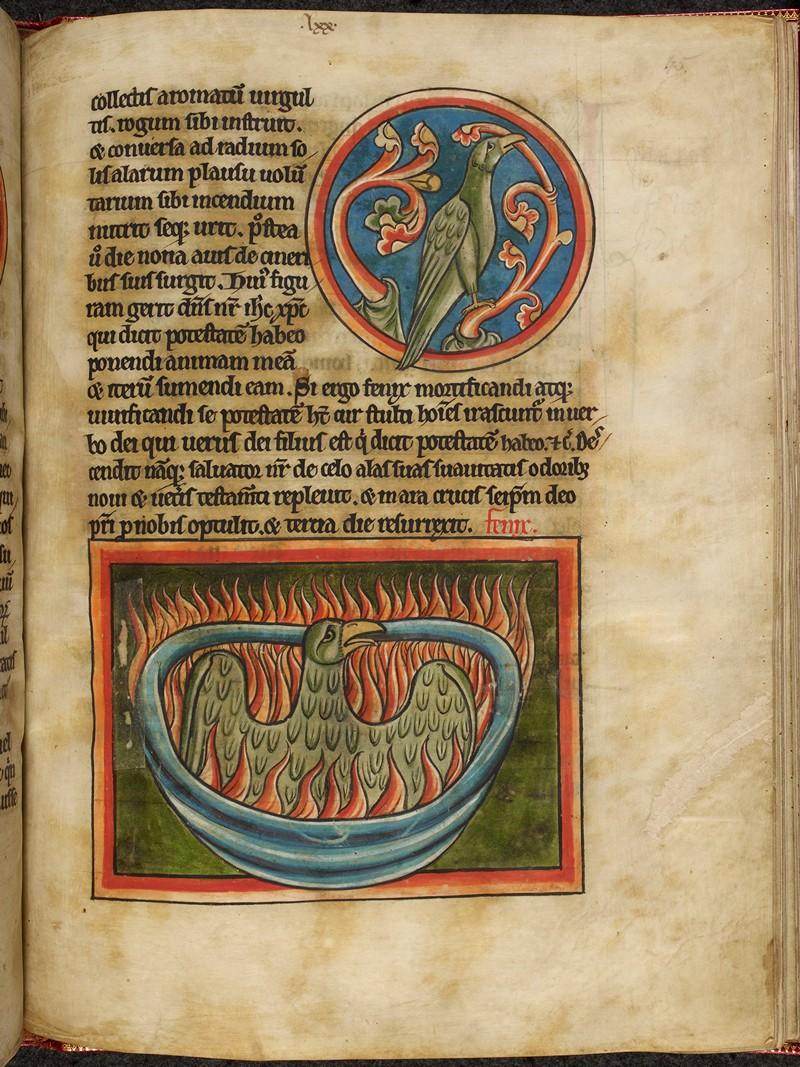 Свет из глубины веков: 800 «иллюминированных» манускриптов Средневековья в свободном доступе 24