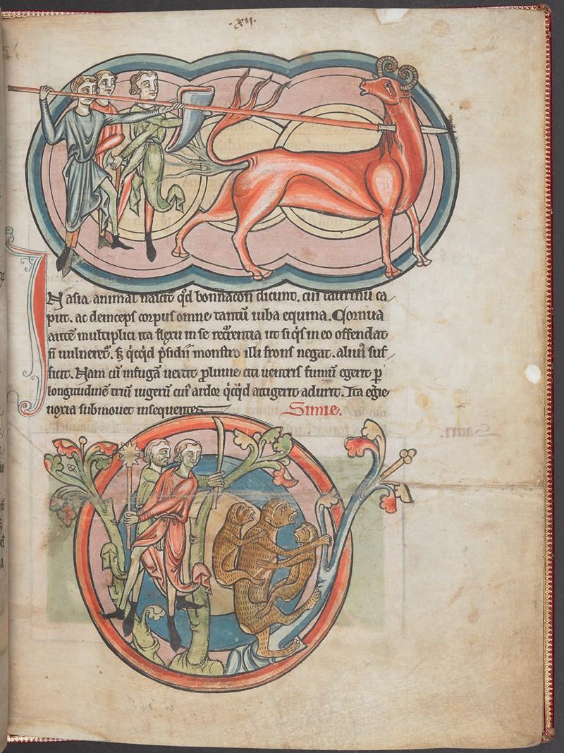 Свет из глубины веков: 800 «иллюминированных» манускриптов Средневековья в свободном доступе 26