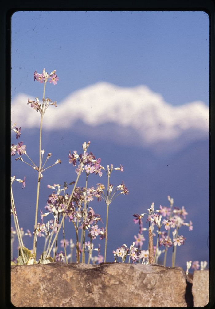 Сикким – сотни фотографий из закрытого гималайского королевства 1