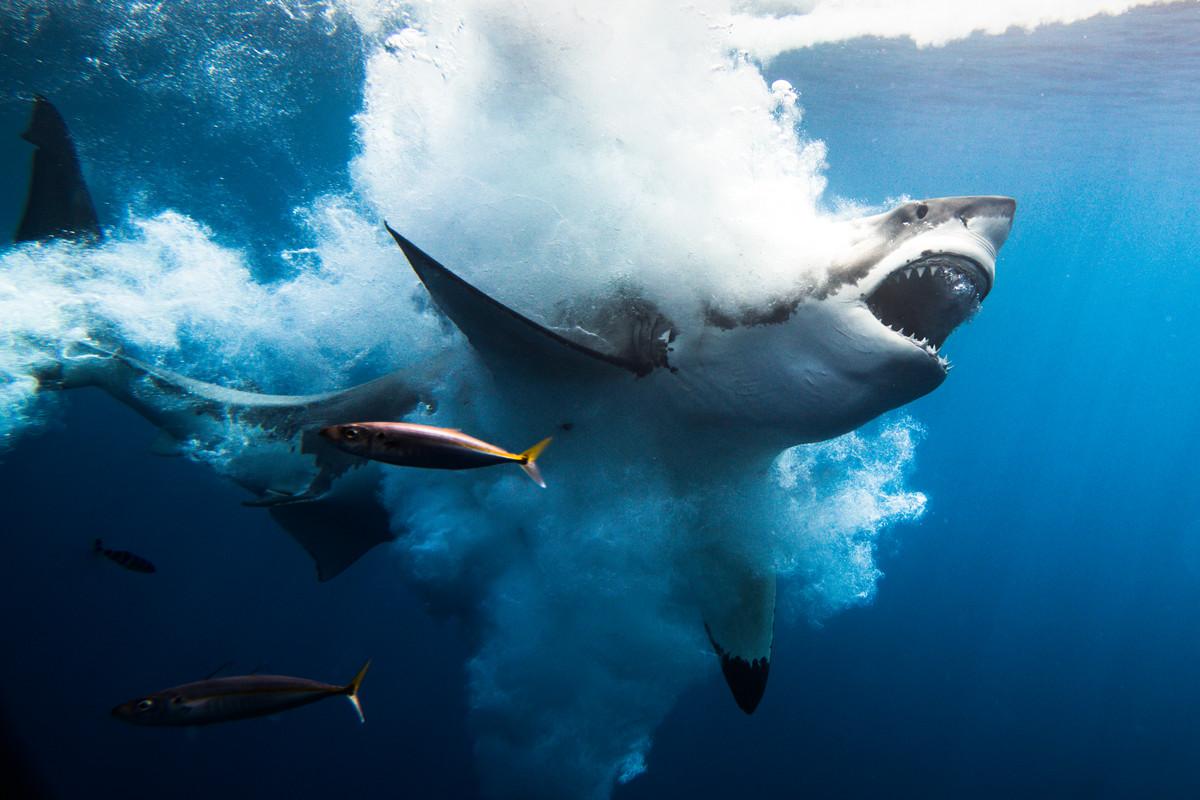 Природа и культуры мира в работах победителей первой Мальтийской международной фотопремии  10