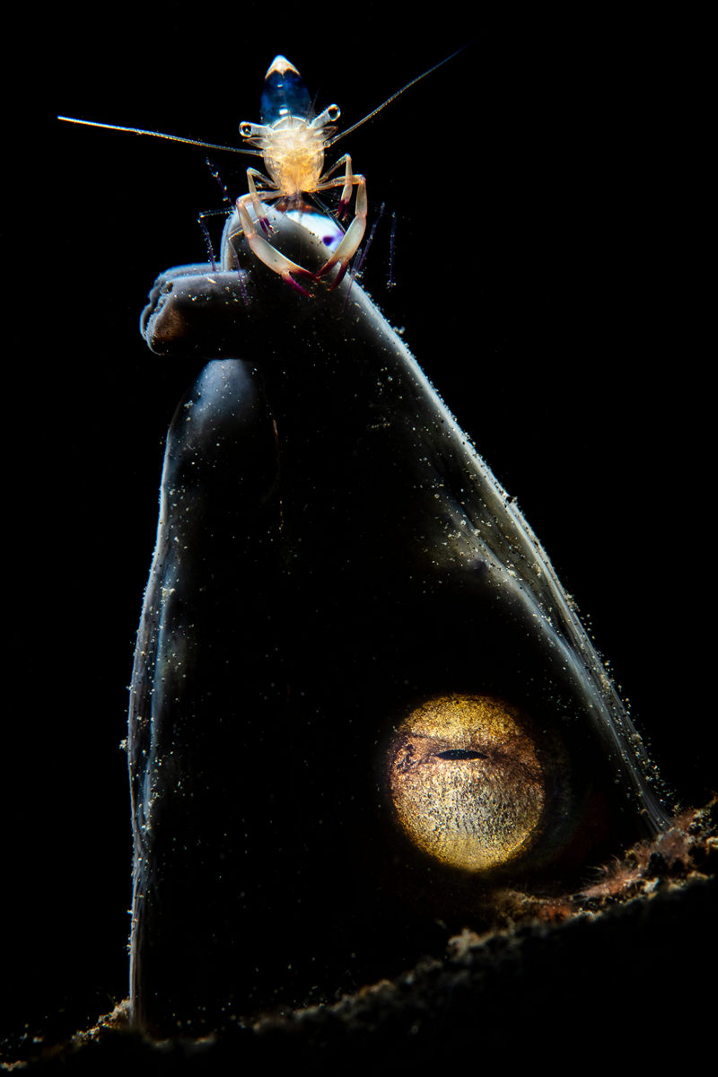 """The life of the sea depths in the works of the winners of the contest """"Underwater Photographer of the Year - 2019"""" 10"""