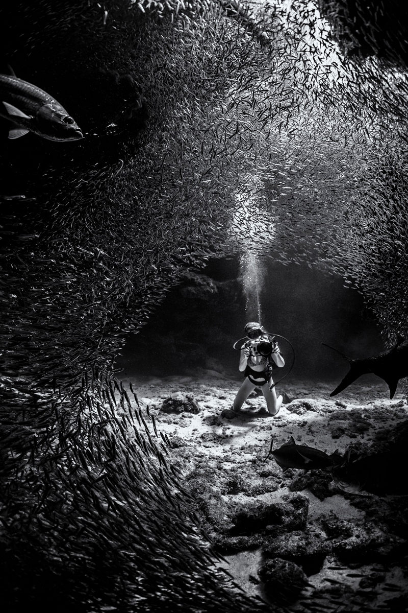 """The life of the sea depths in the works of the winners of the contest """"Underwater Photographer of the Year - 2019"""" 14"""