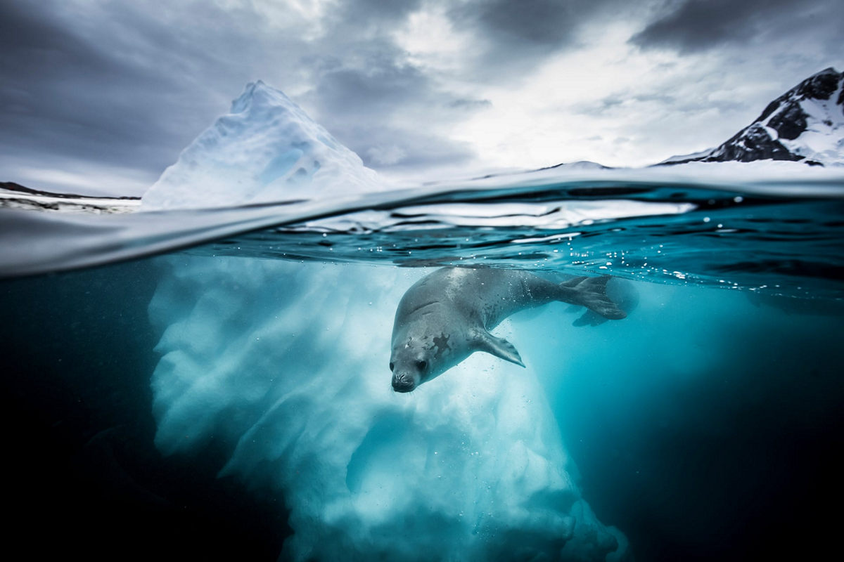 """The life of the sea depths in the works of the winners of the contest """"Underwater Photographer of the Year - 2019"""" 2"""