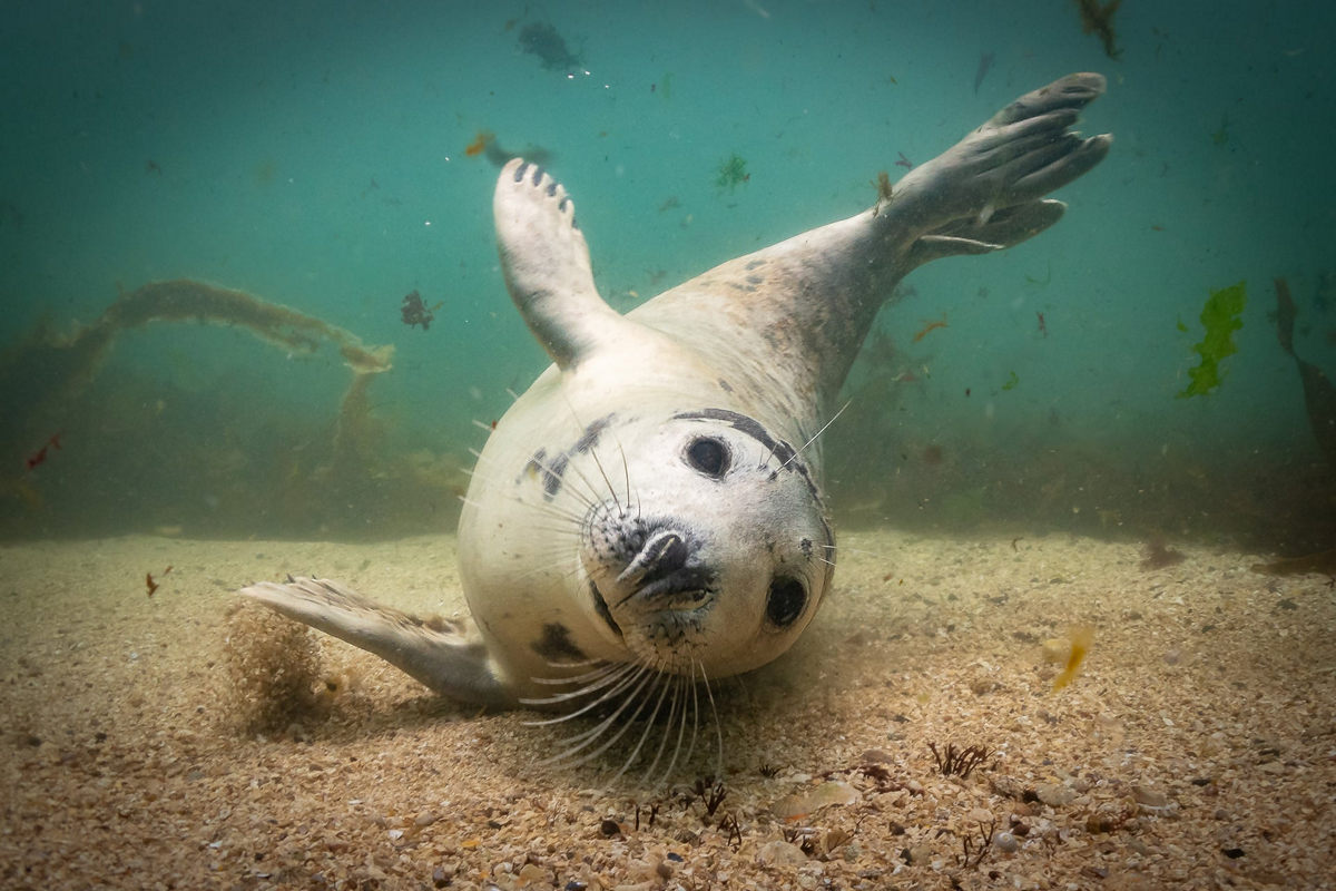 """The life of the sea depths in the works of the winners of the contest """"Underwater Photographer of the Year - 2019"""" 25"""