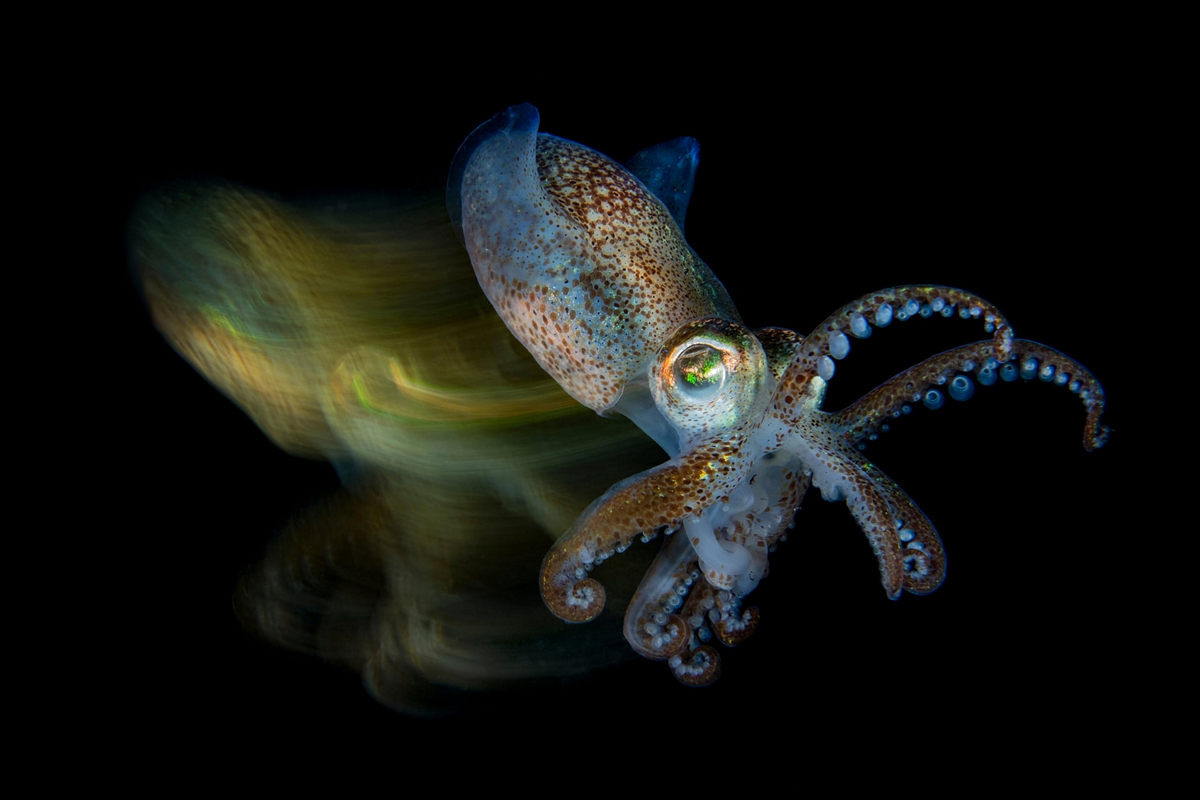 """The life of the sea depths in the works of the winners of the contest """"Underwater Photographer of the Year - 2019"""" 3"""